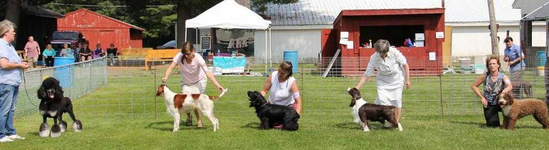 Ukc Grand Champion Akc Swiftwater S Fate Stepped In Cgc